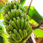 Read more about the article Bananas…!!!